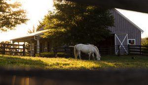 Nashville Horse Farms for Sale